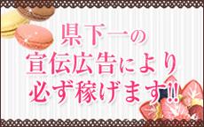 パーティーのお店のロゴ・ホームページのイメージなど