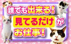 キティーズテラス 渋谷店のLINE応募・その他(仕事のイメージなど)
